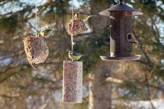 Fuglene trenger vårmat: Slik lager du din egen fuglemat Bird Feeders, Outdoor Decor, Teacup Bird Feeders
