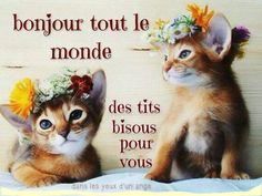 Bonjour tout le monde des tits bisous pour vous #bonjour chats chatons couronnes de fleurs drole rigolo marrant Happy Wednesday, Happy Day, Neuer Monat, Happy Weekend Images, Good Morning Good Night, Bob Marley, Cute Animals, Teddy Bear, Funny