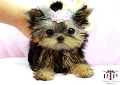 Someday...I will have a cutie like this little sweetie!