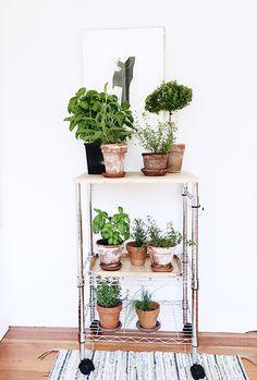 Plant cart