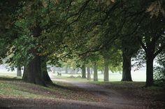 https://flic.kr/p/zp8p6Z | Trees, Sunny Hill Park, Hendon, London NW4, 3rd October 2015 | > > >