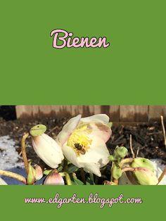 Winterglück - die Bienen Winter, Vegetables, Food, Bumble Bees, Bees, Shade Perennials, Winter Time, Vegetable Recipes, Eten