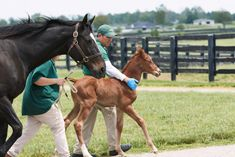 Zenyatta Delivers a Candy Ride Filly Zenyatta Horse, Thoroughbred, Farm Photo, Horse Racing, Beautiful Day, Equestrian, Horses, Candy, Animals