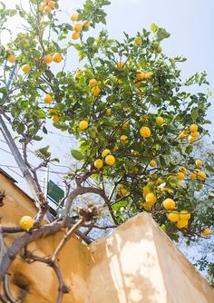 Greece Travel Inspiration - Lemon tree in Plaka, Athens, Greece • WishWishWish
