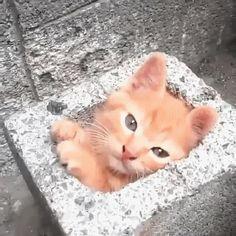 Hermit Kitten