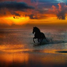 Horse running through the sunset surf. It doesn't get much more majestically beautiful than this. #horses #sunset #beach