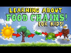 Food Chains ,Food Webs,Energy Pyramid in Ecosystems-Video for Kids - YouTube