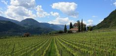 IN BICI TRA I VIGNETI  La Strada del Vino dell'Alto Adige propone un tour per bici attraverso frutteti e vigneti, lungo il percorso della vecchia ferrovia, ma anche attraverso la città di Bolzano alla volta di residenze medioevali e cantine vinicole che invitano a piacevoli soste.