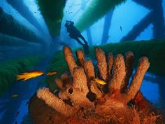 In a marine sanctuary in the Gulf of Mexico, steel pillars encrusted with sponges protect small fish and buffer the Texas shoreline against wild waves.