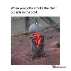 Funny Smoke Blunt Memes | Stoner Meerkats Outside Pics | Smoking Weed Outside Memes | Pothead Humor When you gotta sneak outside to smoke a blunt with your buds, but it's cold as shit! Funny Meerkats pic weed meme under heat lamp. When you gotta smoke the blunt outside in the cold Find and share the […] More   The post When You Gotta Smoke The Blunt Outside In The Cold Funny Weed Memes appeared first on Weed Memes.   #PotheadHumor #FunnyWeedPics #ClassicStoner #StonerHumor #HitTheBlunt