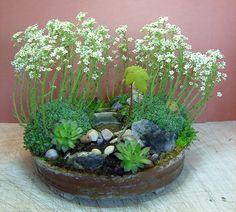 kvetoucí skalničky na zahrádce s rybníčkem a malým javorem R.Kaiserová