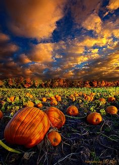 Fall & Thanksgiving (~~Pumpkin Crossing ~ Horizon series, autumn in Wisconsin by Phil-Koch~~) Autumn Scenery, All Nature, Fall Pictures, Harvest Pictures, October Pictures, Pumpkin Pictures, Fall Images, Halloween Pictures, Fall Photos