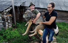 Oleg and wife Yelena carry one of the wolves to the front of their house.
