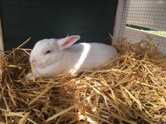 Weil Stroh das beste Bett ist #kaninchen #herbst #mittierendurchsjahr #bunny #stall #love