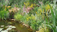 Mocsári növények széles választéka kereskedésünkben! www.aquapet.hu