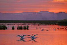 lake Izunuma, Miyagi Prefecture