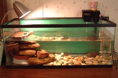 """Caring for Pet Turtles in Tanks """"How to"""" Setup"""