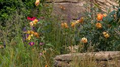 Explore the line-up of more than 30 exciting show gardens and features at the RHS Hampton Court Flower Show in 2018 Hampton Court Flower Show, Rhs Hampton Court, The Hamptons, Natural Beauty, Explore, Fingers, Green, Nature, Outdoor