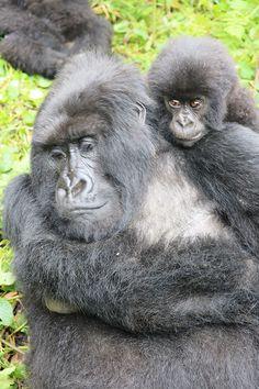 gorillas trek in rwanda