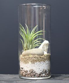This Cylinder Vase Air Plant Terrarium by MakersKit is perfect! #zulilyfinds