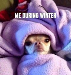 Me during winter wrapped up in cozy blanket