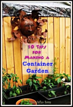 10 Tips for Making a Container Garden
