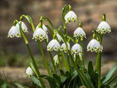 Spring greets - by arnoldspringer on 500px