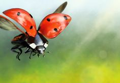 Ladybug by Maszkai.deviantart.com on @DeviantArt