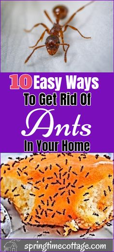 Household Cleaning Tips, Diy Cleaning Products, Cleaning Hacks, Ant Removal, Homemade Insecticide, Ant Spray, Ant Problem, Diy Pest Control, Get Rid Of Ants