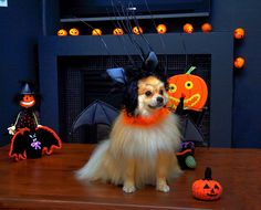 6 tips for a safe Halloween
