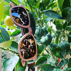 Made using the same technique as skateboard decks, our new 'Walker' sunnies are tough but still lightweight in case you feel like busting a kick flip every now and then😄 Skateboard Decks, Feel Like, Sunnies, How Are You Feeling, Feelings, Instagram, Skateboards, Skate Board, Sunglasses