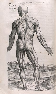 Vesalius (http://www.pinterest.com/pin/287386019942054803/). Anatomia - University of Toronto Libraries