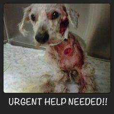 Severely neglected dog rescued from Arizona shelter. Can you spare the cost of a cup of coffee, or a magazine, to help the angels who have rescued this poor chap? It is easy a d quick to donate. PLEASE HELP AND PLEASE SHARE. He has a long recovery ahead.