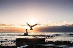 Even the birds love #BurleighHeads :)