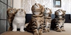 10 cat gifs to brighten your day
