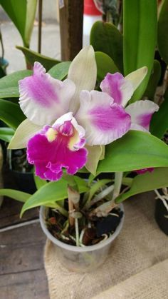 Organic Horticulture Tips And Tricks For Your Garden Orchids Garden, Orchid Plants, Garden Plants, House Plants, Exotic Flowers, Beautiful Flowers, Planting Succulents, Planting Flowers, Orchid Terrarium