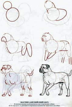 How to draw a Dog Step By Step Easily Ideas) Pencil Art Drawings, Drawing Sketches, Cool Drawings, Animal Sketches, Animal Drawings, Dog Drawing Tutorial, Watercolor Art Diy, Anatomy Art, Drawing Techniques