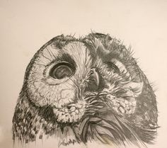 Absolutely beautiful owl drawing