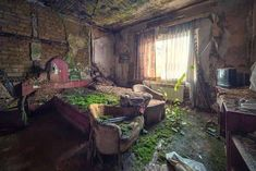 chambre hotel abandonnée et envahie par végétation