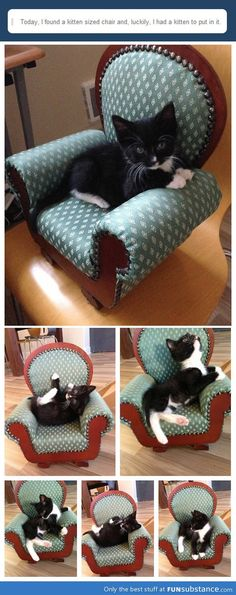 What to do with a kitten-sized chair