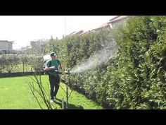 Tratamentele fitosanitare se aplica pe toata perioada anului, indifferent de tipul plantei. Ele sunt importante in eliminarea bolilor si a agentilor fitopatogeni