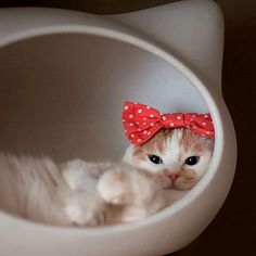 What a cutie Kittens Cutest, Cats And Kittens, Cute Cats, Funny Cats, Animals And Pets, Baby Animals, Cute Animals, Pretty Cats, Beautiful Cats
