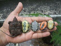 Baby turtle bellies http://ift.tt/2mxwtx3