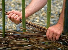 Making a Willow fence / Brampton Willows
