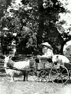 Goat cart, hauling child and pig.