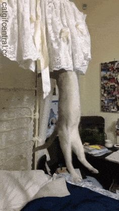 Lovely Lace Cute Cats, Funny Cats, Curiosity Killed The Cat, Curious Cat, Cute Gif, Cats Of Instagram, Cute Animals, Blanket, Pets