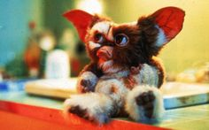 Gizmo the Mogwai Les Gremlins, Gremlins Gizmo, Baby Animals, Cute Animals, Cute Cartoon Pictures, Weird Creatures, Little Monsters, Horror Films, Digimon