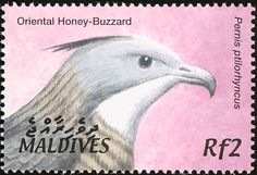 Crested Honey Buzzard stamps - mainly images - gallery format