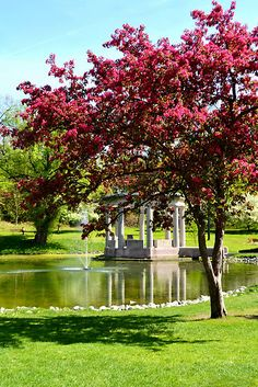 Congress Park- Saratoga Springs NY.  How beautiful New York is during the month of May. The snow melts and the trees turn pink..