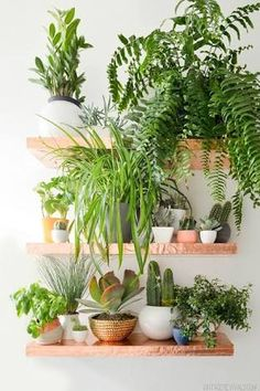 Image result for house inspo wood floors white walls lots of plants greenery